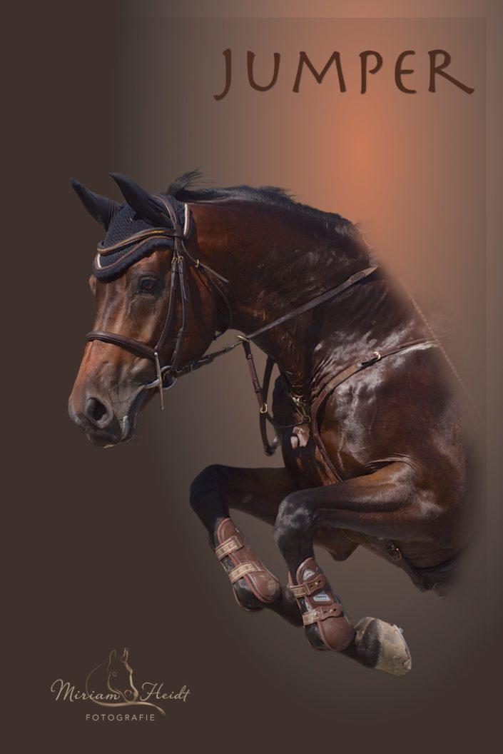 Pferdeportrait über dem Sprung mit Lichteffekten