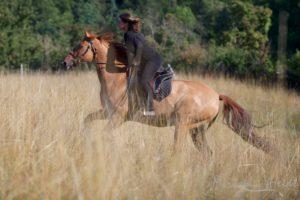 Reiterin galoppiert im hohen Gras