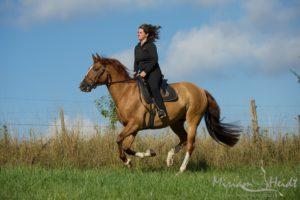 Pferd und Reiter vor blauem Himmel