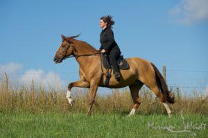 Pferd und Reiterin vor blauem Himmel